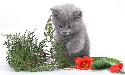 Позитив дня! Кошаче-крольчячий роман
