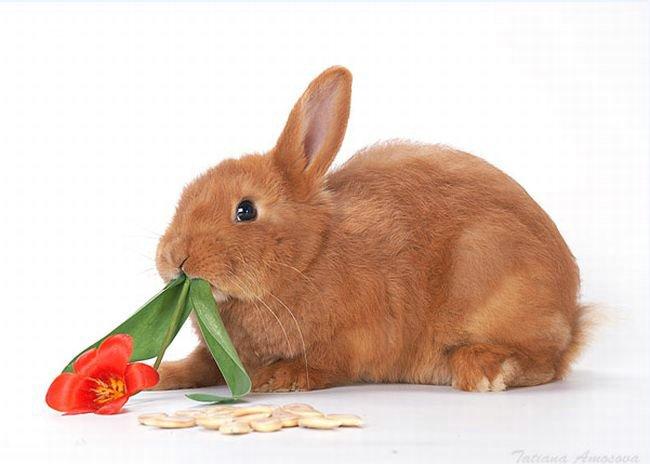 Зайцы самые глупые животные?