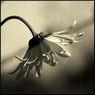У цветов надо учиться красоте
