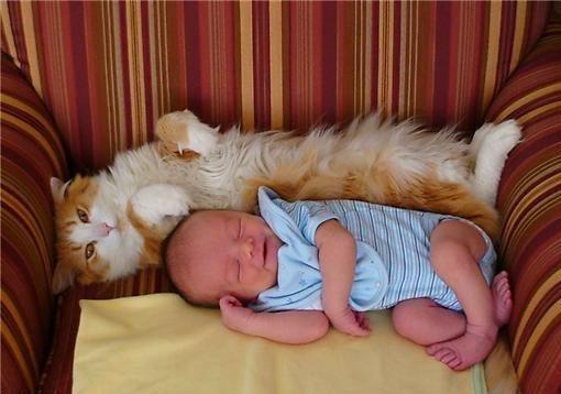 Дети и кошки (17 фото)