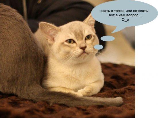 О чем думают коты на кошачьих выставках (27 фото)