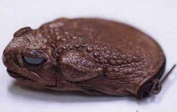 Сумочка из жабы. 2000 год. Куплена за $5.50