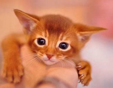 Интересные факты о кошках в картинках (78 фоток)