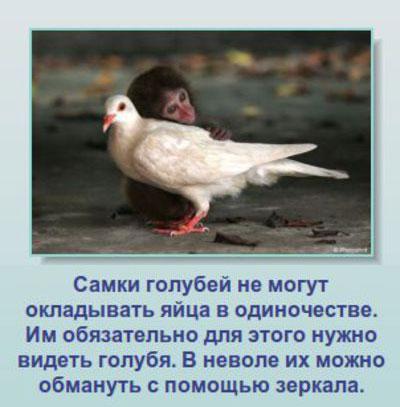 Подборка интересных фактов про животных