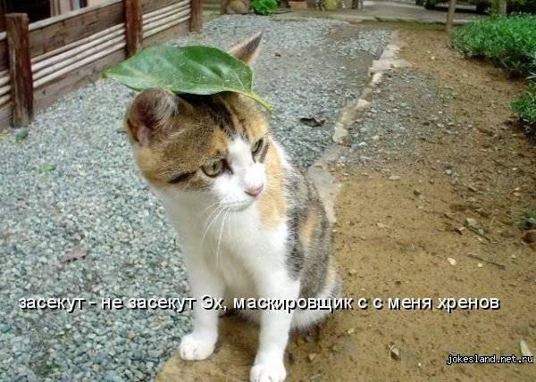 Кот Леопольд максимально точно передает суть
