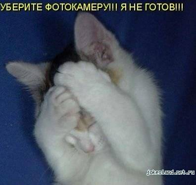 О чем думают кошки и не только... Часть 3