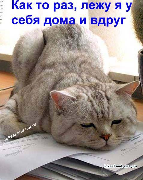 История рыжего кота актуальный креатив про работу