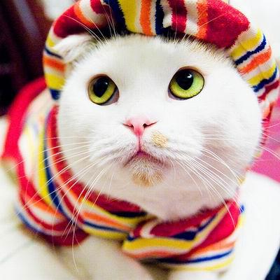 Почему кошка лучше, чем женщина (30 фото)
