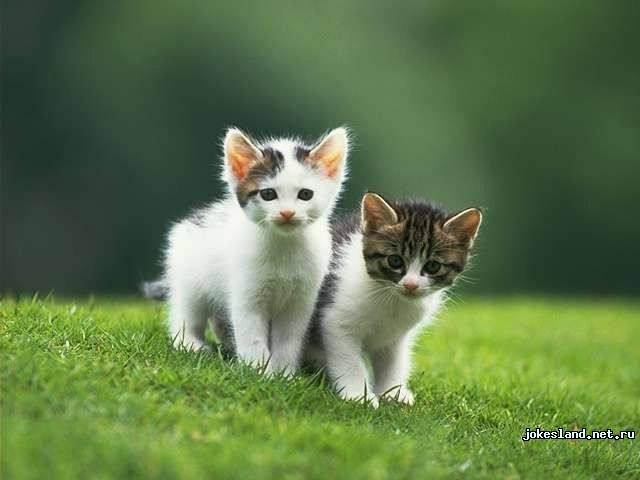 Задачка с кошками