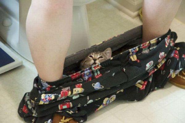 Коты в засаде (37 фотографий)