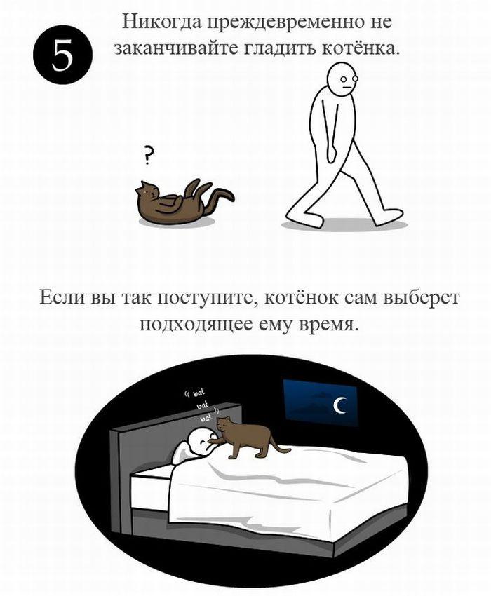 Как правильно ласкать котенка