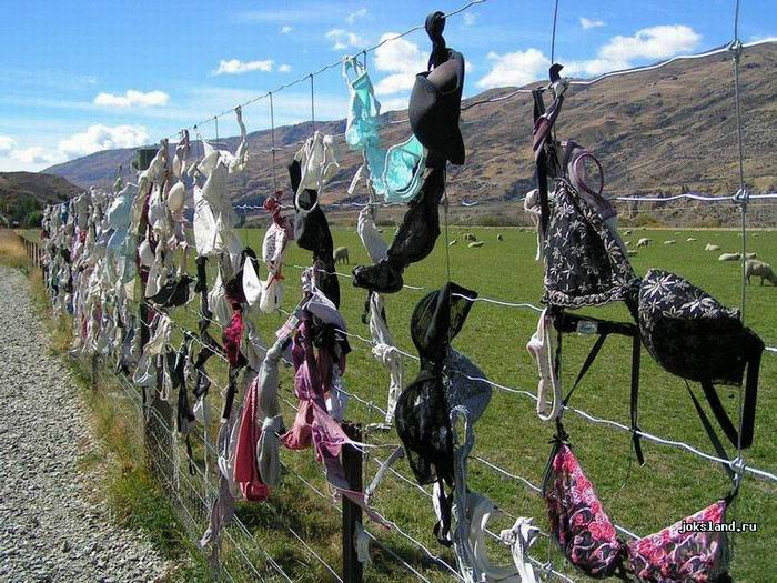 Бюстгальтеровый забор в Кардроне