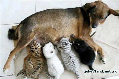 Животные любят друг-друга