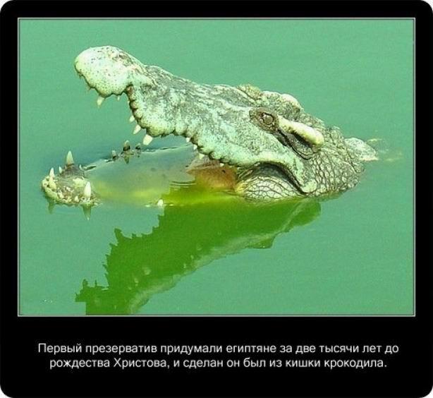 Факты о крокодилах (20 фотографий)
