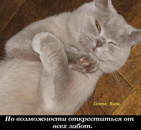 Прямые обязанности кота по дому (19 фотографий)