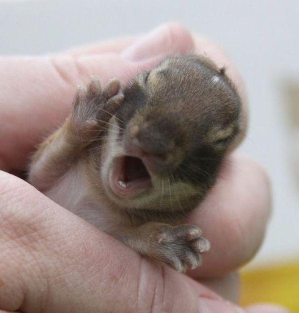 Позитив дня: Крошечные прикольные животные