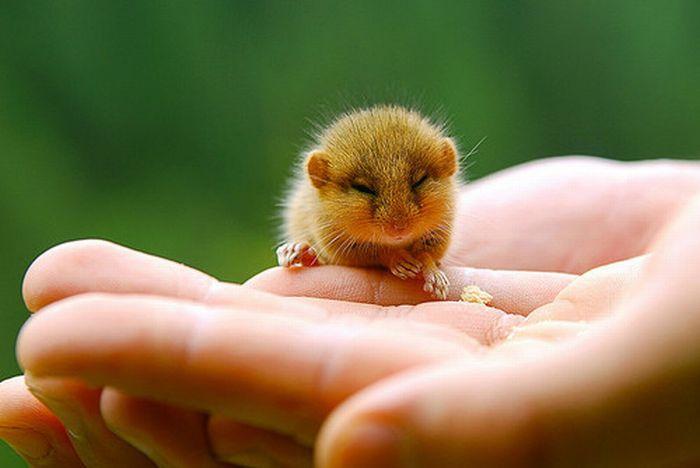 Позитив дня: Крошечные прикольные животные (часть 2, 37 фотографий)
