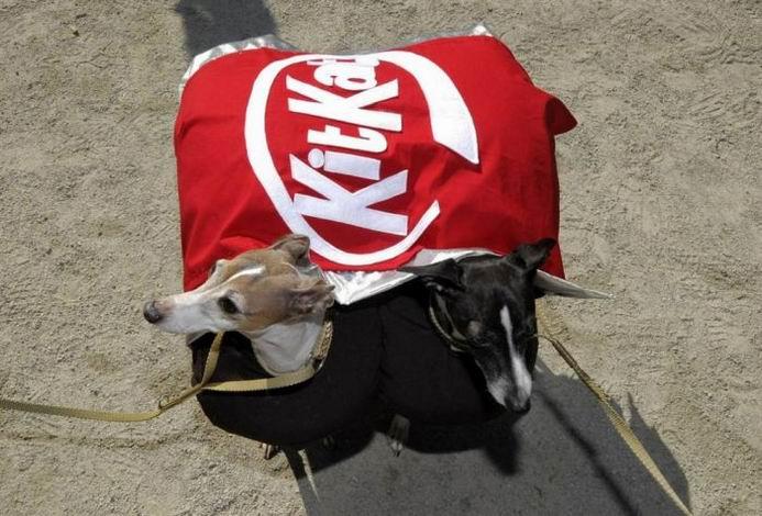 Собаки в костюмах на парадах