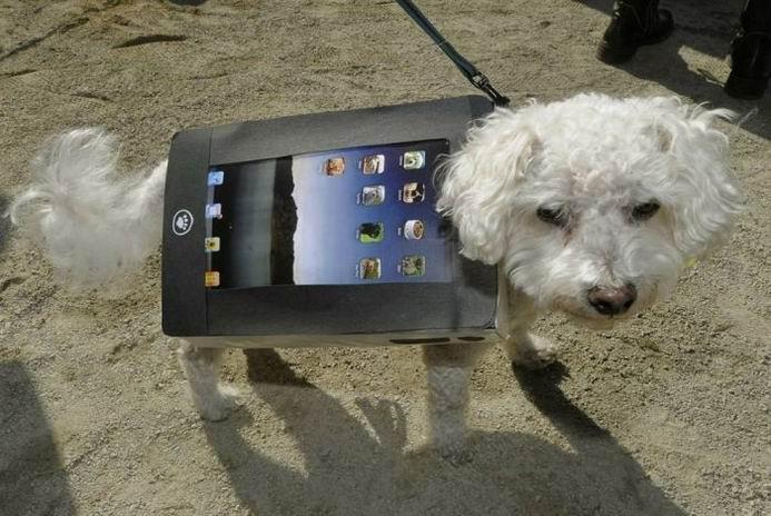Собаки в костюмах на парадах (20 фотографий)
