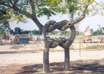 100 самых странных деревьев мира