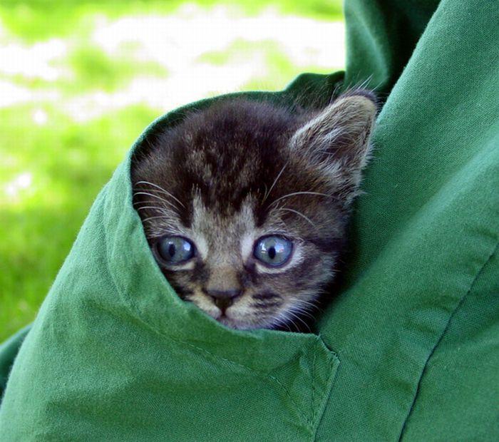 Позитив дня: Котята в карманах (22 фотографии)