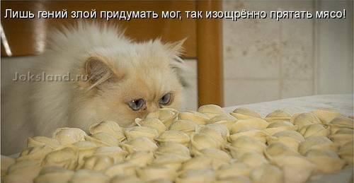 Позитив дня: Забавные коты (25 фотографий)