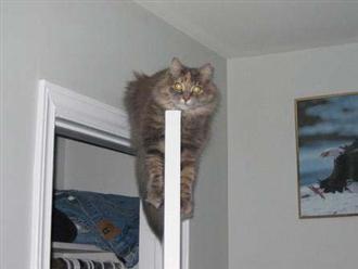 http://jokesland.net.ru/pic/cats/6909.jpg
