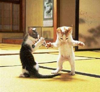 Приколы из жизни кошек