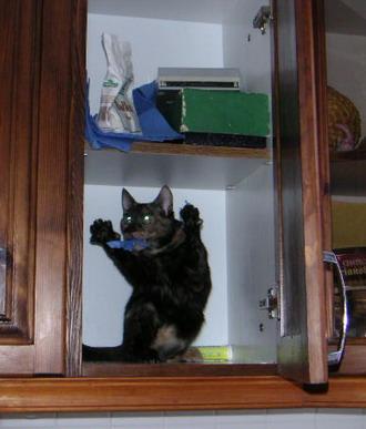 http://jokesland.net.ru/pic/cats/8912.jpg