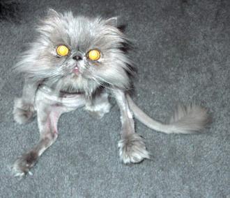 http://jokesland.net.ru/pic/cats/9032.jpg