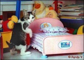 http://jokesland.net.ru/pic/cats/9211.jpg