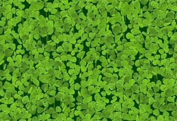 Four leaf clover (игра счаcтья)