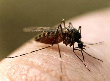 Шлепни комарика