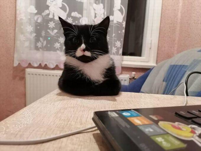 Подборка прикольных фото про кошек