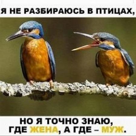 Я не разибраюсь в птицах
