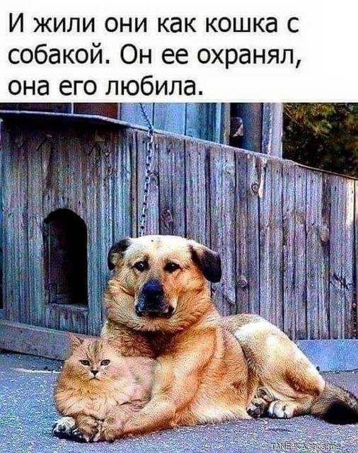 И жили они как кошка с собакой