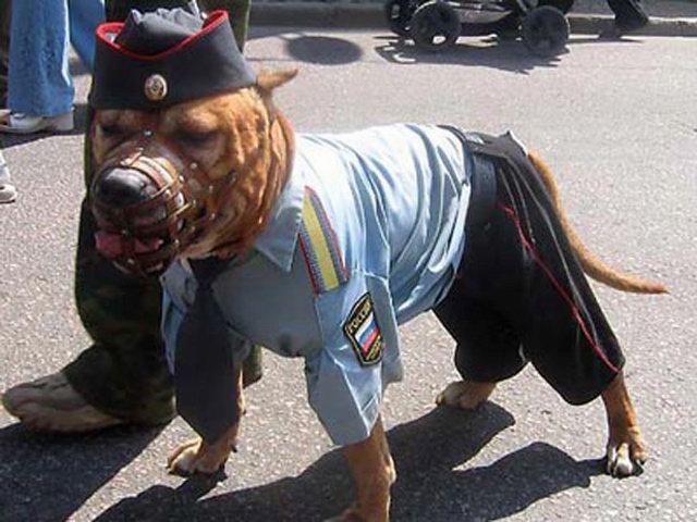 Собака сотрудник полиции
