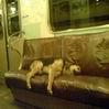 Устала, как собака