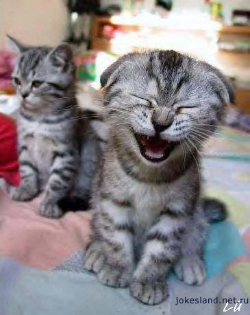 Contagious laughter - Laughing Kitten!!!