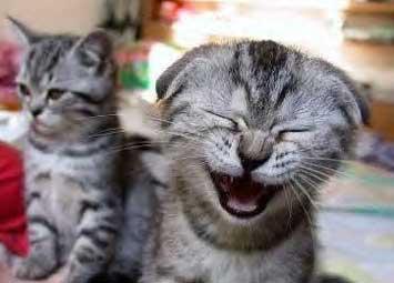 Заразительный смех - Смеющийся котенок
