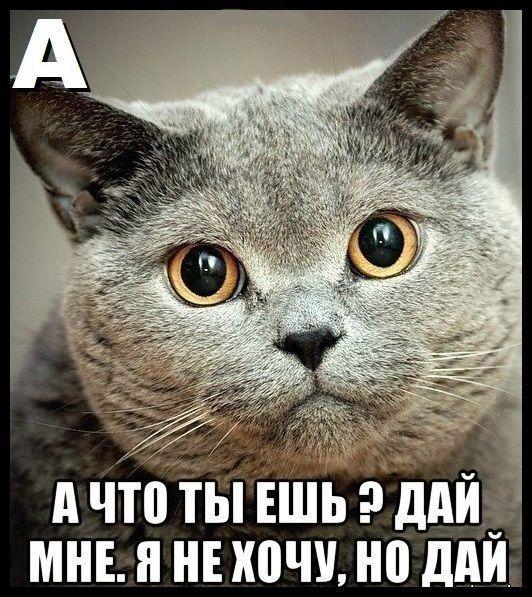 Кошачий алфавит (10 фото)