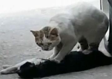 Животные умеют любить (трогательный видеоролик)