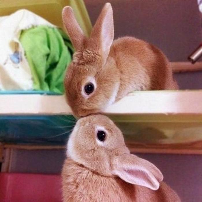 Жила-была семья кроликов