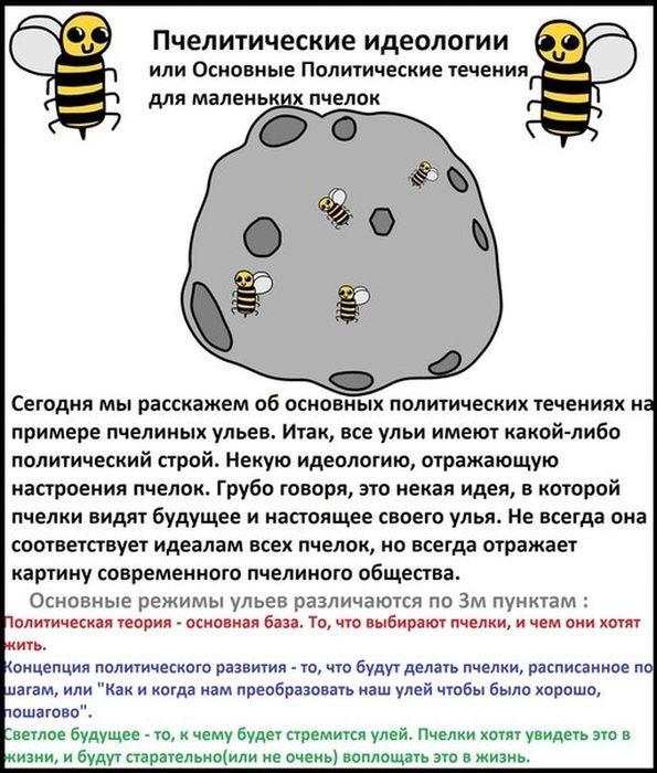 Пчелиная политика (19 картинок)