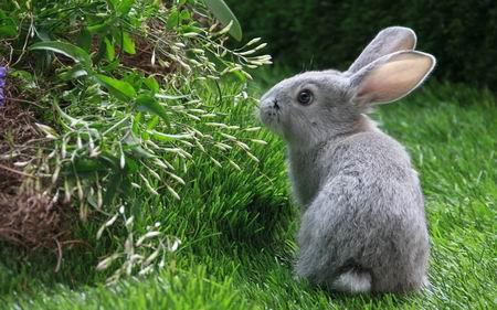 Под каким кустом сидит заяц