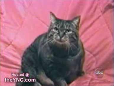 Говорящий кот (video)