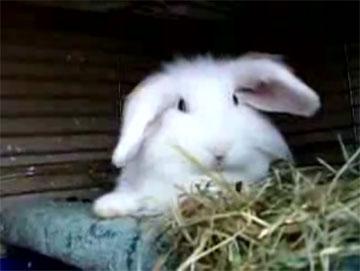 Не будите кролика!!! (video)