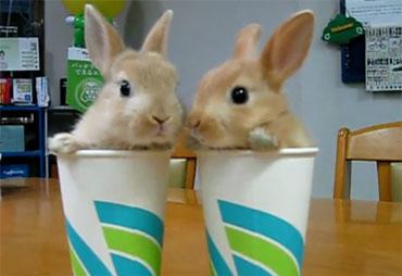 Позитив дня: Кролики (video)